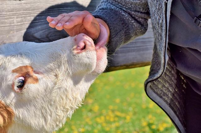 Exkurze studentů - farma Otročín a mlékárna Hollandia