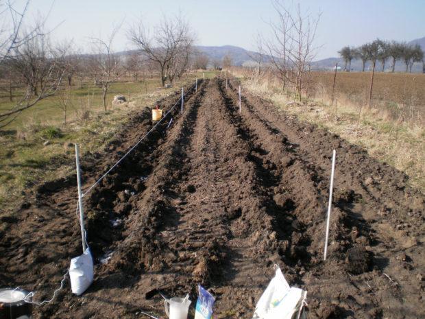 Pozemky bioovocnářství Schauerovy zahrady