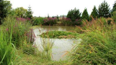 Schauerovy zahrady