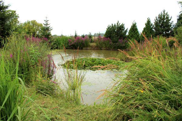 Rybník - Schauerovy zahrady