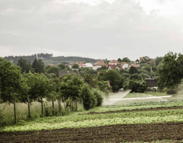 Pozemky ekozemědělce pana Košaře