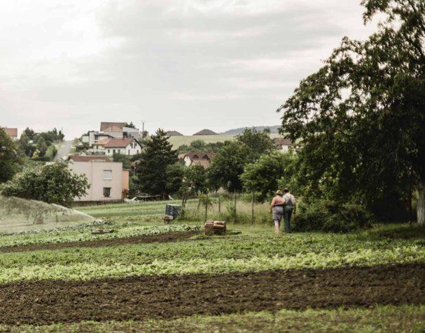 Ekozemědělec pan Košař s manželkou ve svém zahradnictví