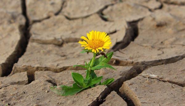 Sucho začíná tam, kde končí život v půdě