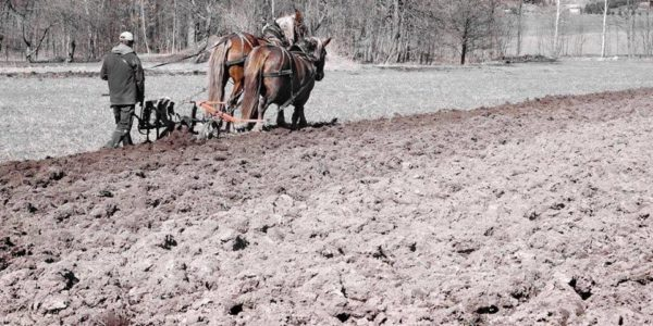 polní den na farmě Lukava