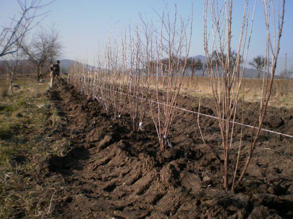 Pohled do jarního sadu - Schauerovy zahrady