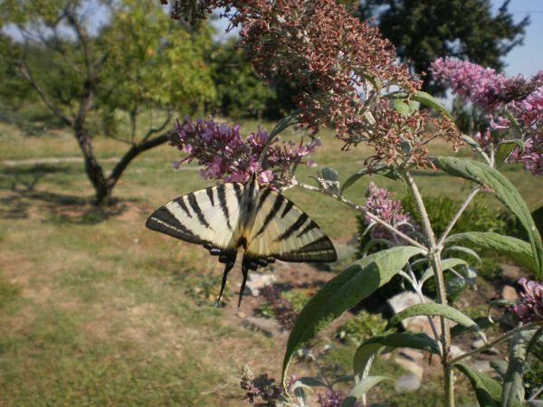 Biodiverzita v ekosadu Schauerovy zahrady