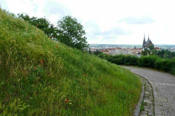Kvetoucí trávník v brněnském parku Špilberk.